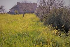 Impressions de printemps (blogspfastatt (+4.000.000 views)) Tags: spring primavera frühling 春 весна wiosna bahar lente musimsemi ربيع