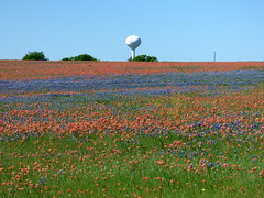 Field of Dreams (The Old Texan) Tags: paintbrushes bluebonnets texas