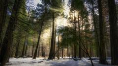 Morning light (Dan_Fr) Tags: mist trees morning forest landscape outdoor winter light snow valley sunrays yosemite california us usa america sony a7r