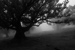 Room in the Dark (Aymeric Gouin) Tags: madeira madère portugal europe forest wood bois foret tree arbre mist brume fog brouillard light lumière monochrome black white noir blanc bw travel voyage mood olympus omd em10 aymgo nature aymericgouin silhouette