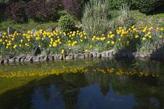_DSC0811 (Riccardo Q.) Tags: parcosegurtàtulipani places parco altreparolechiave fiori tulipani segurtà