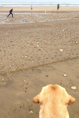Bailey at Crimdon beach