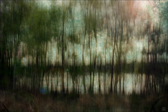 Be Still and Take in the Beauty That Surrounds You.... (ReikiJan24 [Busy Busy - Catch up sooooon!]) Tags: trees painterly texture impressionism loch icm hss intentionalcameramovement blurism pse10 happyslidersunday
