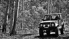A DAY IN THE PUTTY STATE FOREST 01-02-2009 (smortaus) Tags: blackandwhite bw photo image photos australian australia images nsw snapshots mycountry australianimages australianlanscape thisisaustralia australianphotos imagesofaustralia smortaus dannyhayes australianblackandwhite dannyhayes2013