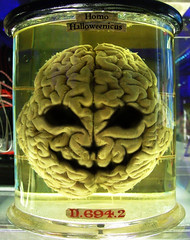 Formaldehyde Brain Halloween on the Brain
