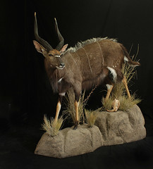 "Animal Art Taxidermy • <a style=""font-size:0.8em;"" href=""http://www.flickr.com/photos/27376150@N03/9353640464/"" target=""_blank"">View on Flickr</a>"