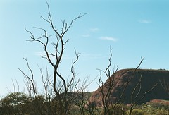(kodacolorframes) Tags: camping film 35mm australia roadtrip outback katatjuta redcentre chinonce4s fujiproplusii100