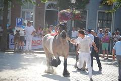 trekpaardkeuring ijzendijke 21072013 3902 (jo_koneko_san) Tags: horses horse holland netherlands cheval nederland zeeland chevaux hollande zeeuwsvlaanderen 2013 ijzendijke zeeuwstrekpaard