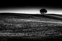 Toscana em Preto e Branco (Luis Fernando Barp) Tags: europa italia v toscana cretesenese