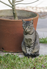 CAT WITH NECKLACE / GATA COM COLAR (Arthur Perruci) Tags: brasil cat necklace nikon gato colar pernambuco nordeste gravatá 55200mm coth f456 supershot d5000 nikond5000 afsdxvrnikkor55200mmf456gifed arthurperruci