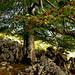 Bosques de Asturias: Bosque de Pome