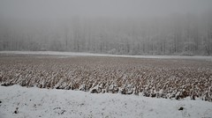 snow on crops