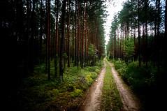 Road in the Dzukia forest (ohnedich) Tags: lietuva
