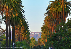 Hollywood Palms (1 Johnny) Tags: california sunset cali palms la losangeles palmtrees hollywood hollywoodsign moviestars