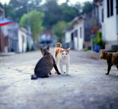 Gang (alemershad™) Tags: wild 120 film analog cat mediumformat kodak bokeh squareformat malaysia mf analogue manual kiev sq portra e6 seremban kiev88 kucing 80mm filem iso160 alem negerisembilan arsatb vescan alemershad 120my canoscan9000f analoguebokeh