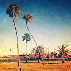 {photo} along the halifax ... (katehailey) Tags: mobile photography kate hailey palmtrees only 365 daytonabeach daytona iphone 2014 halifaxriver project365 picf iphoneography picfx iphoneonly instagram ifttt iphone4s mextures 365infocus