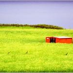 Sheep Hut, Lindisfarne, Lomo Style