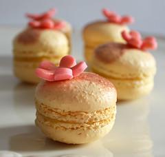 makaron (Akustiksamuray) Tags: cake dessert sweet almond pasta cupcake macaroni laduree foodphoto macaron makaron homemad rukush