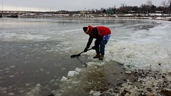 Shoveling the river (SchuminWeb) Tags: bear county winter cold river harbor md ben action web january maryland prince pg national change keep potomac network polar georges climate chesapeake plunge 2014 chesapeakeclimateactionnetwork nationalharbor keepwintercold schumin schuminweb