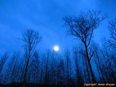 Blue night shadow (FleurdeLotus28) Tags: wood blue moon france tree nature night lune nikon hiver atmosphere bleu nuit arbre bois branche corbeaux eureetloir