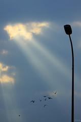 Sunbeams (-clicking-) Tags: light sky lamp birds skyscape atmosphere vietnam sunrays sunbeams raysoflight