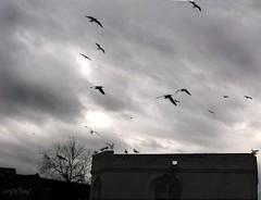Little Hell (innpictime  ) Tags: bridge birds pub gulls chapel stives darksky cambs littlehell