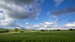 natural carpet (bernd obervossbeck) Tags: green nature field landscape natur feld wideangle grn landschaft kornfeld sauerland weitwinkel hochsauerland schren