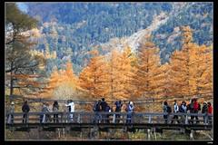 IMG_8690 (c0466art) Tags: autumn trees light cloud mountain snow beautiful japan canon season landscape amazing scenery colorful tour view place popular  5d2 c0466art