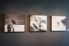Thule 2013,Ilulissat 2014,Scorebysund 2011.Fotografie di Carsten Egevang (Sherpa1963) Tags: carstenegevang fotografia artico palazzotreoci mostratreoci ghiaccio cambiamenticlimatici