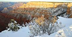 Grand Canyon 86 (Krasivaya Liza) Tags: grandcanyon grand canyon national park canyons nature natural wonder az arizona holiday christmas 2016 snowy winter cliffs cliffside edgeofcliff