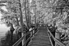 Come See (John C. House) Tags: everydaymiracles cypress nikon infrared boardwalk d70s johnchouse tennessee nik lowlight blackandwhite monochrome reelfootlake