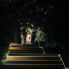 Há luz no Parque (Francisco (PortoPortugal)) Tags: 0382017 20160723fpbo3484 light luz noite night pessoas people serralves porto portugal portografiaassociaçãofotográficadoporto quadrada square franciscooliveira