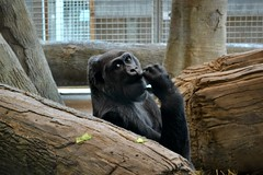 Chilling out (Edale614) Tags: wildlife columbuszoo columbus
