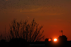 Sunset. (fozy) Tags: trees houses sunset sky orange sun birds clouds canon landscape photography scenery warm photooftheday picoftheday 600d 550d