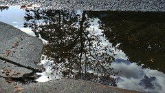 Beauty in Puddles (Theen ...) Tags: road street autumn sky reflection tree water rain puddle bright suburban cloudy suburbia samsung stormy foliage adelaide theen flickrandroidapp:filter=none