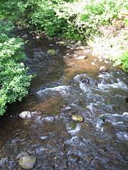 06-28-13 Oregon 454 Oswald West State Park Short Sand Beach Trail Short Sand Creek (Chicagoan in Ohio) Tags: oregoncoast oswaldweststatepark smugglerscove shortsandbeach shortsandbeachtrial
