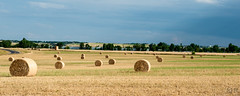 Storms approaching from the West (flanger11) Tags: autumn panorama skyline golden colorado farm harvest straw bluesky boulder fields erie hay bails