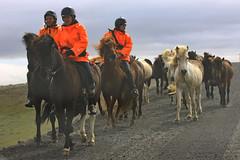 IMG_9626 (Glassholic) Tags: horse cheval iceland july juillet islande kjolur ovs 2013 islandichorse chevalislandais