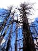 DSC02292 (bruckzone) Tags: ford utah tour grandcanyon parks canyonlands bryce zion nationalparks modelt