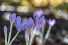 2.0 (rich_rogero) Tags: flowers dof unitedstates bokeh pennsylvania longwoodgardens kennettsquare