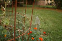 DoF- Garden (angelicajusino) Tags: smalldof