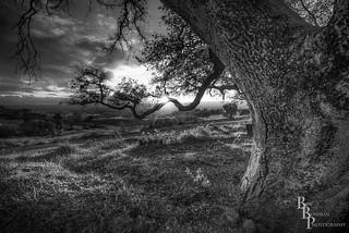 Branch of Light  Re-Edit B/W