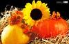 Nature wallpaper (Wonderful beautiful photograph images) Tags: wallpaper beautiful wonderful nice superb awesome images exotic watercolour hd incredible breathtaking classy mindblowing beautifulsunset yellowsunflower naturewallpaper brightyellowsunflower sunsetwallpaper ecommercedevelopment butterflyonsunflower sunsetsunflower beeonsunflower ecommercewebsitedevelopment sunflowersatsunset amazingsunsetwallpaper tropicalislandsunsetwallpaper boatinalakeatsunsetwallpaper goldensunflowerwallpaper gorgeoussunflowers amazingsunflowers redsunflowerwallpaper twosunflowerwallpaper pureredsunflowerwallpaper fieldofflowerswithsunsetwallpaper greenlightsunsetwallpaper beautifullflowersunsetwallpaper sunflowersunsetwallpaper whitefloweronthecoast lavenderfieldsatsunset purplesunsetwallpaper sunflowerinthegarden magnificentredsunsetwallpaper sunsetlightoverthesunflowerfield sunsetinsunflowerfield sunrisescenerysunsetwallpaper sunsetnaturepicture orangesunflowerwithsunset beautifulgoldensunflowerwallpaper