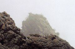 Life on the edge (jonathan charles photo) Tags: life mist plant art topf25 photo cornwall jonathan charles shore survival uncertain jonathancharles perhaver