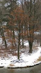 Vue sur l'île aux fesses (clementlambert67) Tags: canada tree nature automne centre du québec neige paysage arbre parc bois rive île drummondville chêne 2013 woodyatt