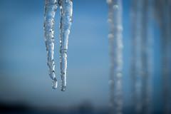 Winter's Fangs