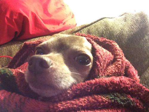 Lil red Dobby-hood