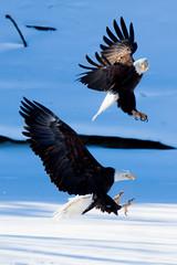 IMG_3661 (judd.furlong) Tags: iowacity canoneos eagles