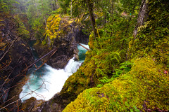 Upper Qualicum Falls (DMac 5D Mark II) Tags: longexposure travel trees winter canada nature water forest river landscape waterfall bc natural vancouverisland greenery parksville qualicum 2014 littlequalicumfallsprovincialpark upperqualicumfalls