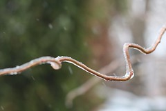 frost bite  12/13 (blumenbiene) Tags: winter black ice frozen frost clear bite eis regen glatteis glazed eisregen blitzeis gefrierender